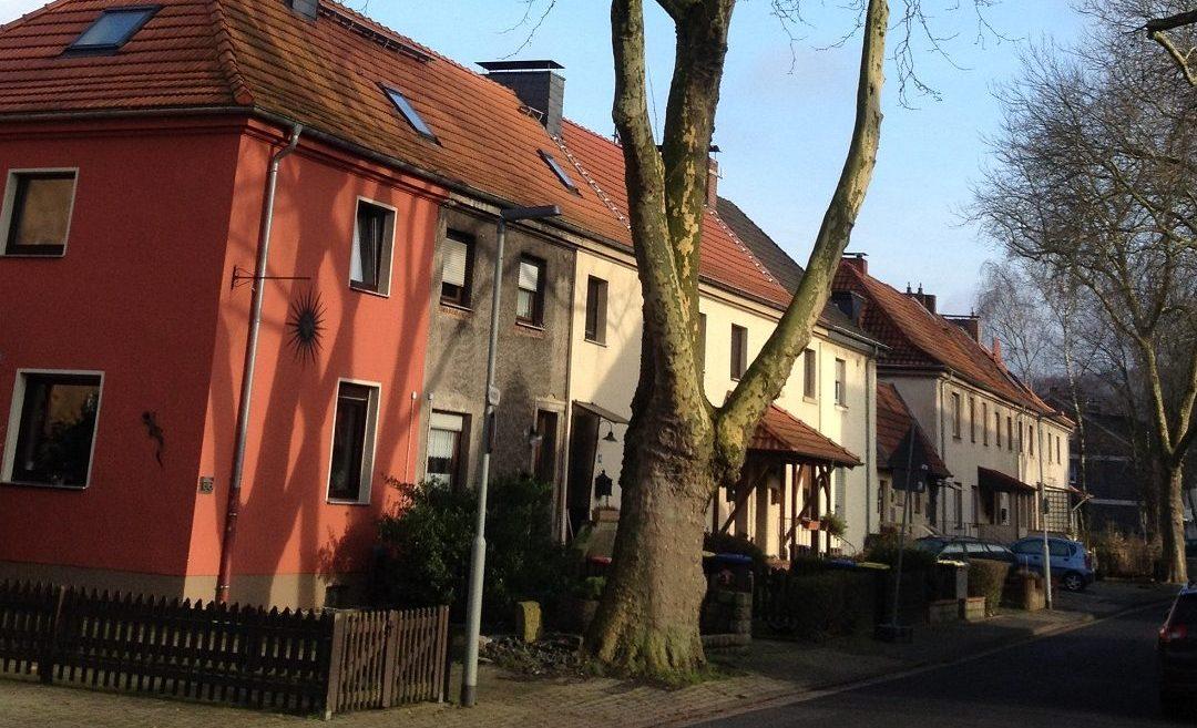 Alte Platane wird am Montag gefällt – Grabenstraße gesperrt