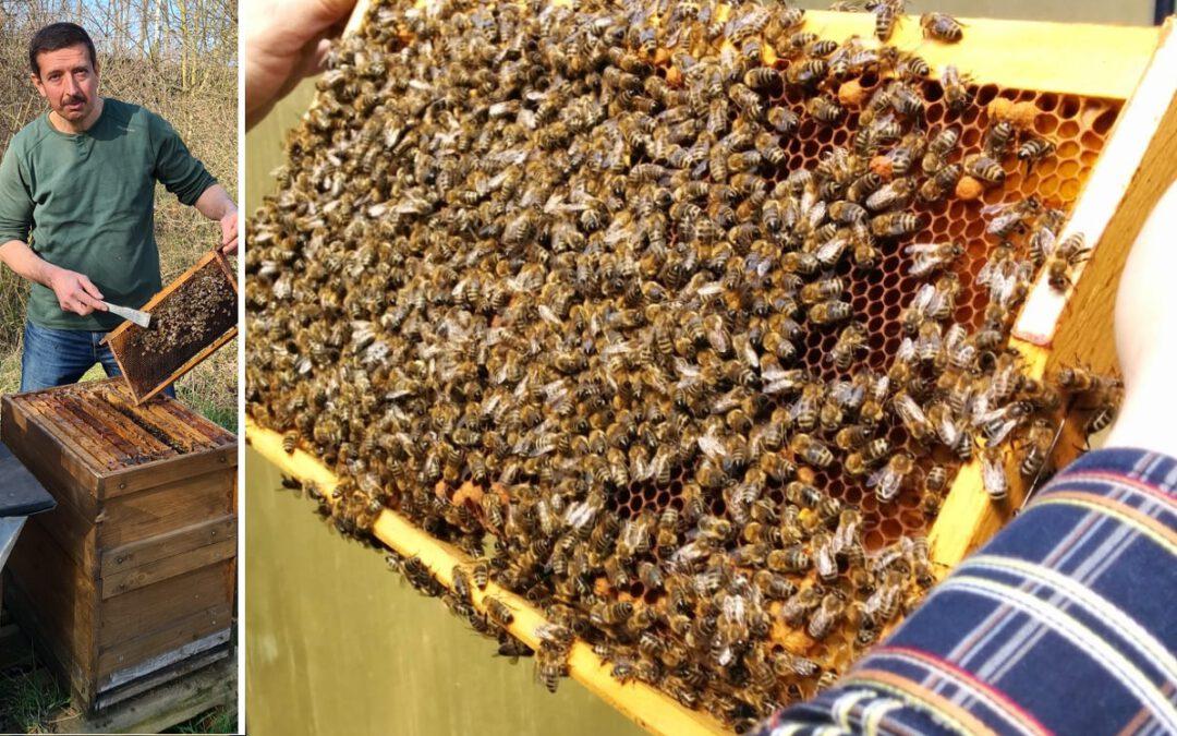 Entspannen unter 200.000 Bienen